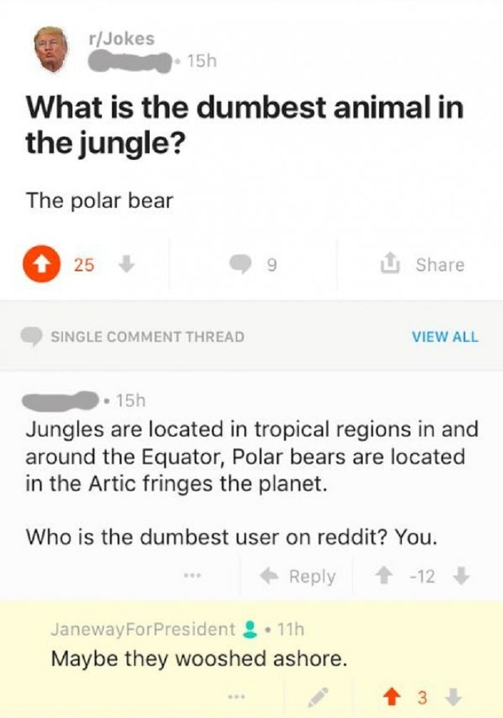 Un Ours Blanc Dans La Jungle