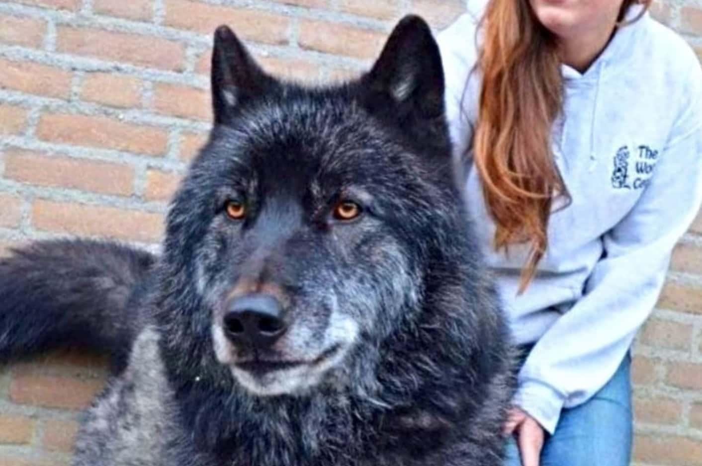 Kurt Köpekler Hakkında Farkındalık Yaratmak