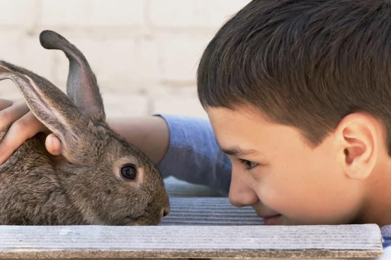 They Called Him Rabbit Boy