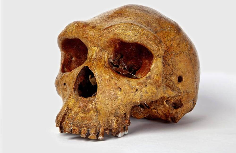 299,999 Year Old Human Skull