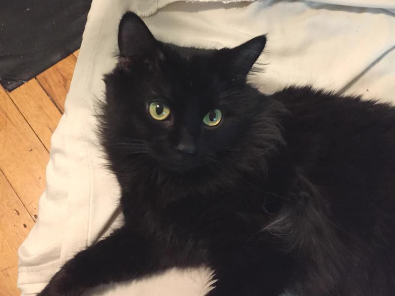 A Tiny Cat