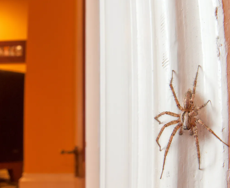 A Spider-Free Home