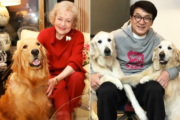 Betty White And Jackie Chan – Golden Retriever