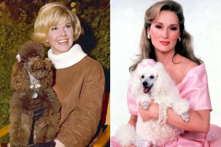 Doris Day And Meryl Streep – Poodle