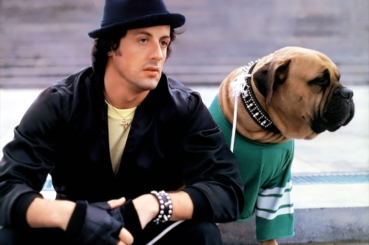 Sylvester Stallone – Bullmastiff