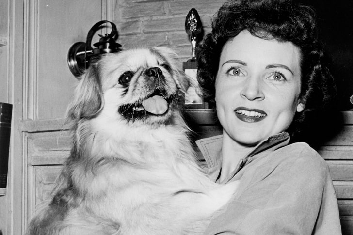 Betty White – Pekingese