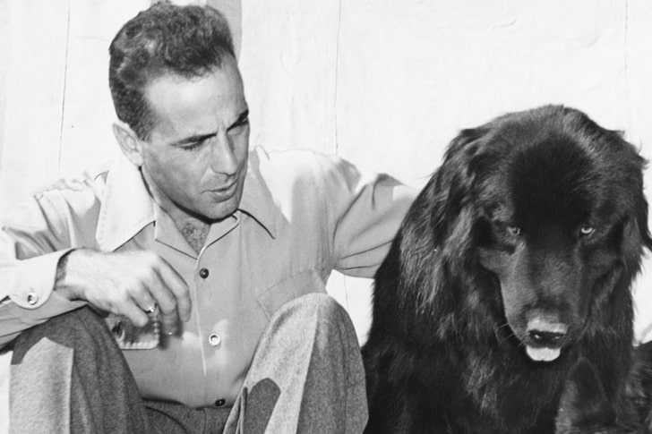 Humphrey Bogart – Newfoundland