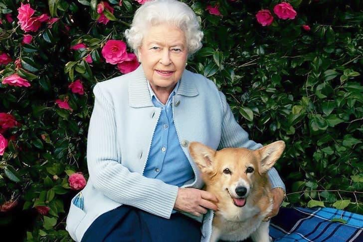Queen Elizabeth – Pembroke Welsh Corgi