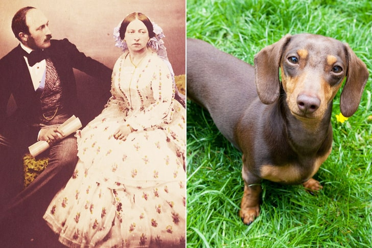 Queen Victoria And Prince Albert - Dachshund