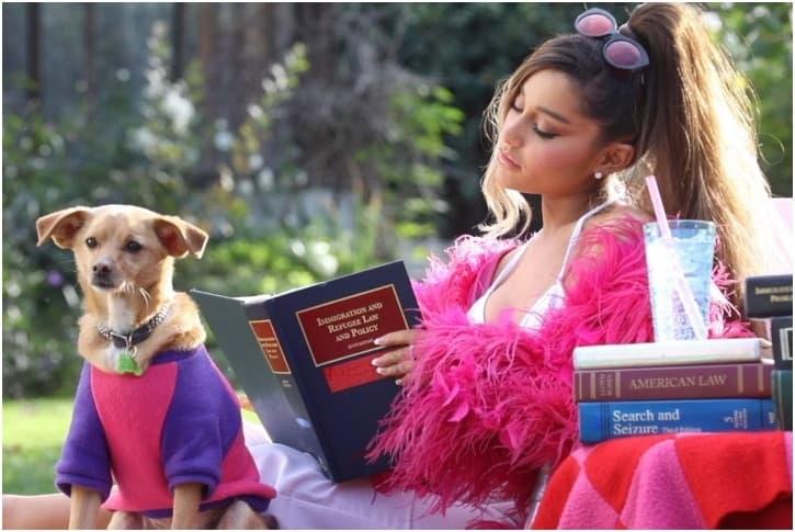 Ariana Grande – Beagle-Chihuahua