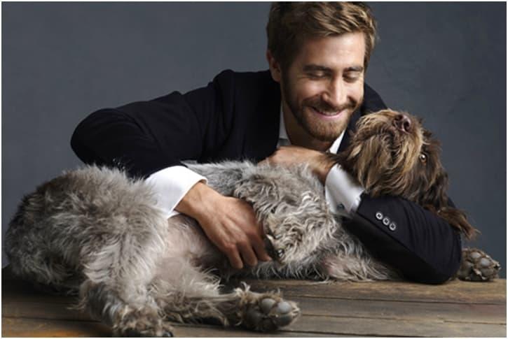 Jake Gyllenhaal – Puggle And German Shepherd