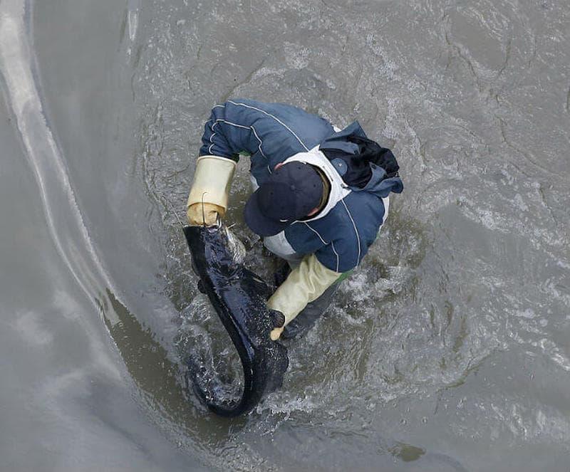 Gli esseri viventi nell'acqua