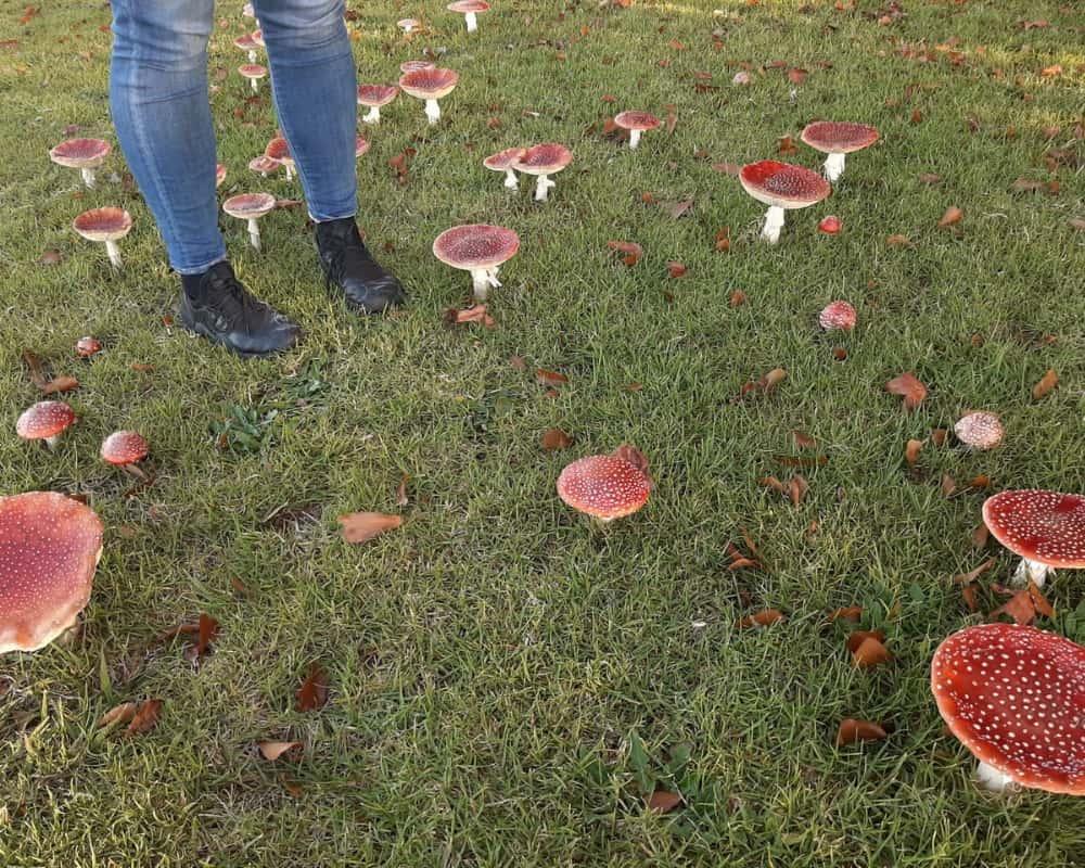 Mushrooms That Tall