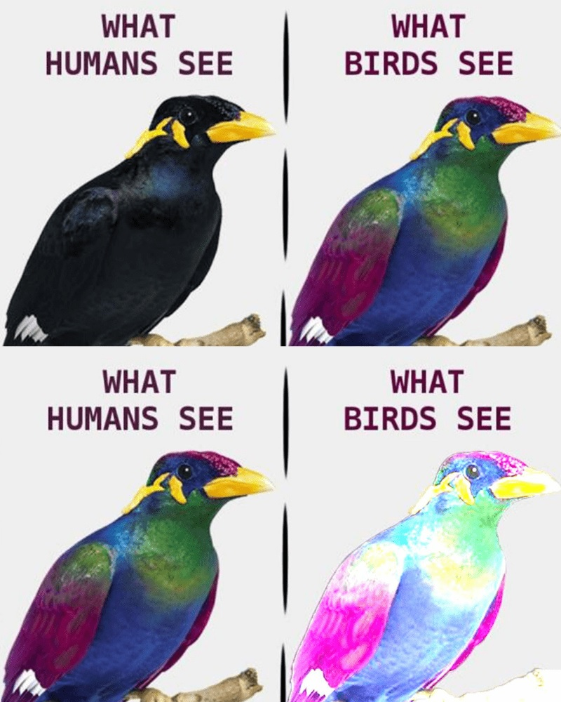 What Humans See Vs. What Birds See