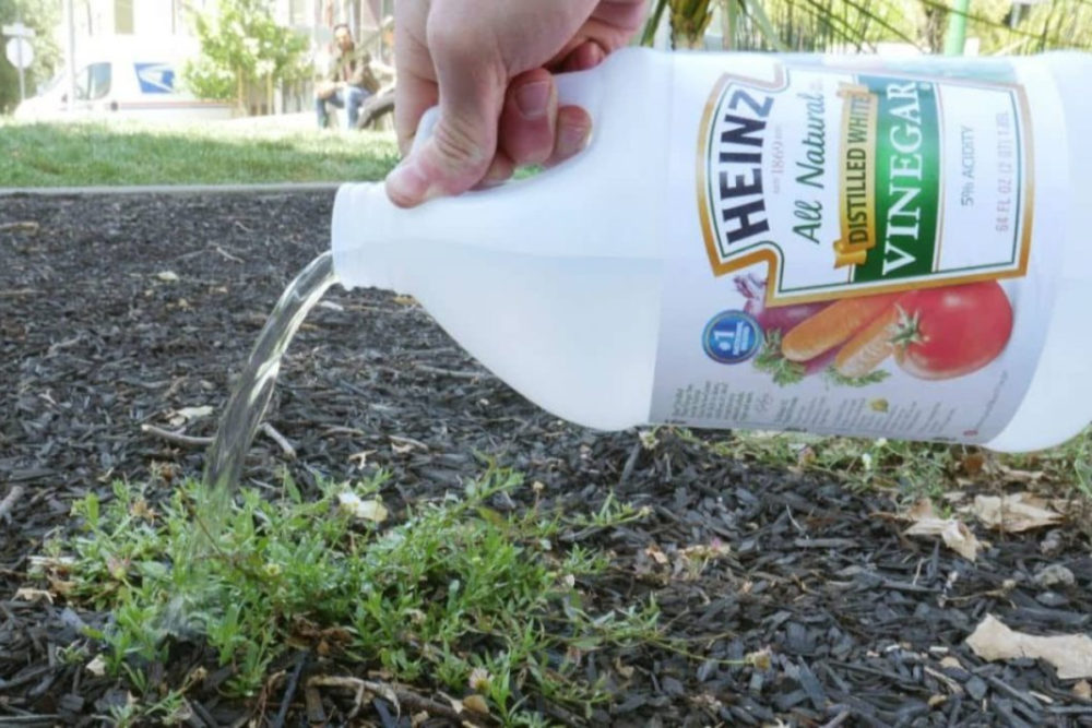 Kill Weeds With It