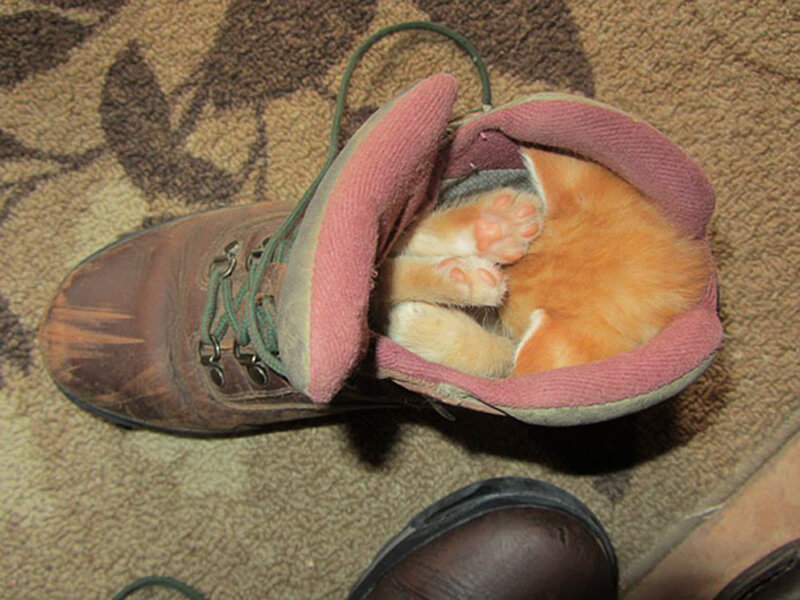 There Is A Cat In My Boot!