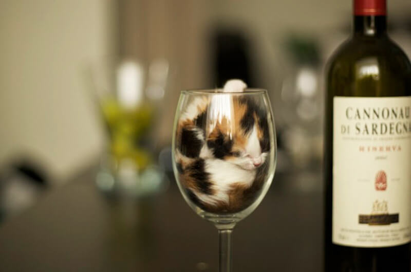 This Is Our Favorite Kind Of Wine
