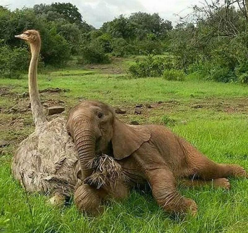 Unexpected Sleeping Buddies In The Wild