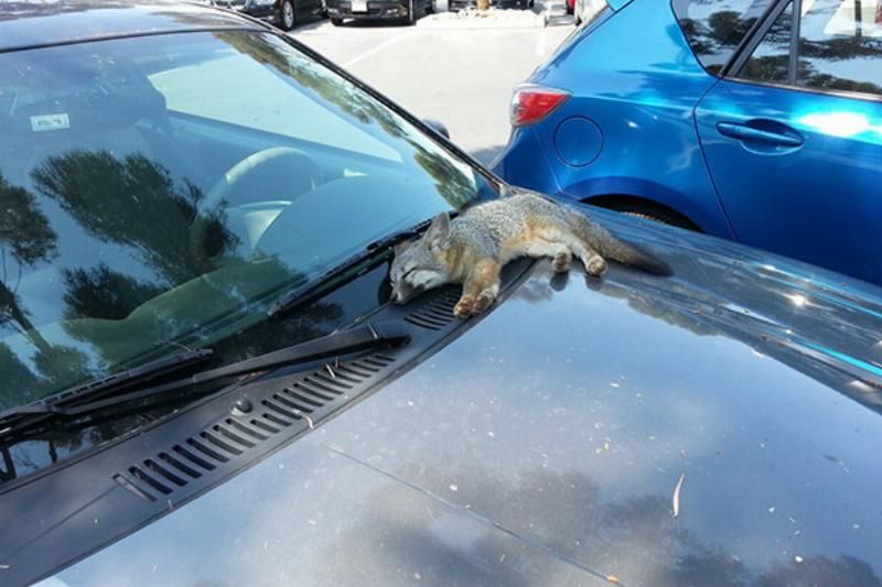 Hanging Out In The Parking Lot