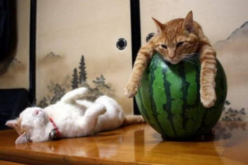 Resting Over A Watermelon