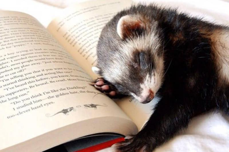 The Book Was Too Dull For Him