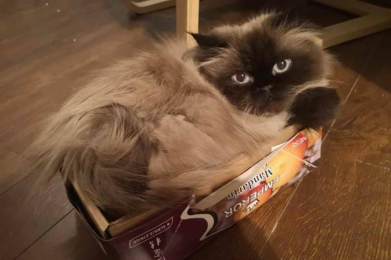 Relaxing In A Cardboard Box