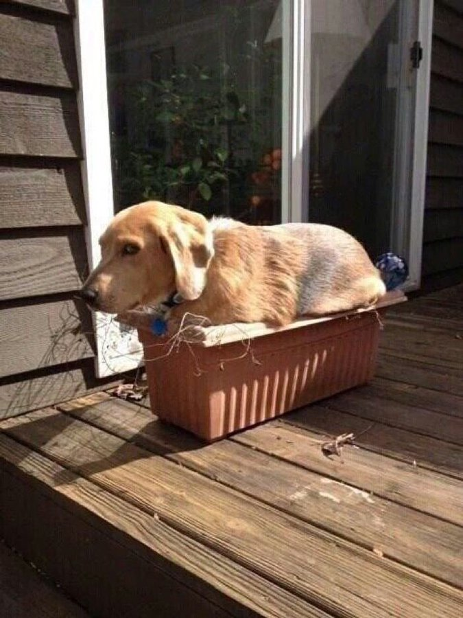 Just Sun Bathing