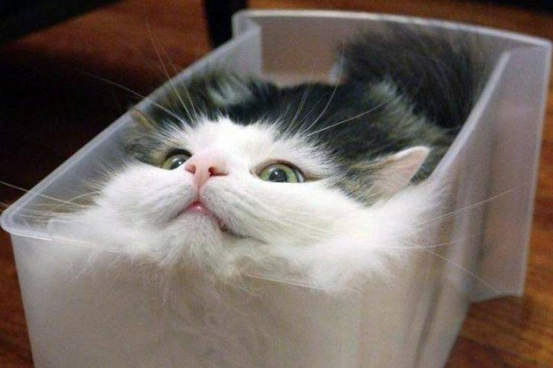 The Cat Compartment