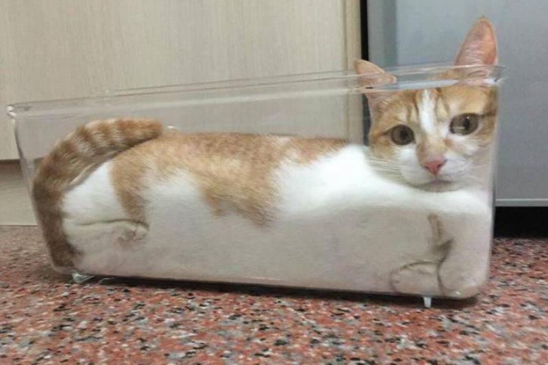The CAT Sserole Dish