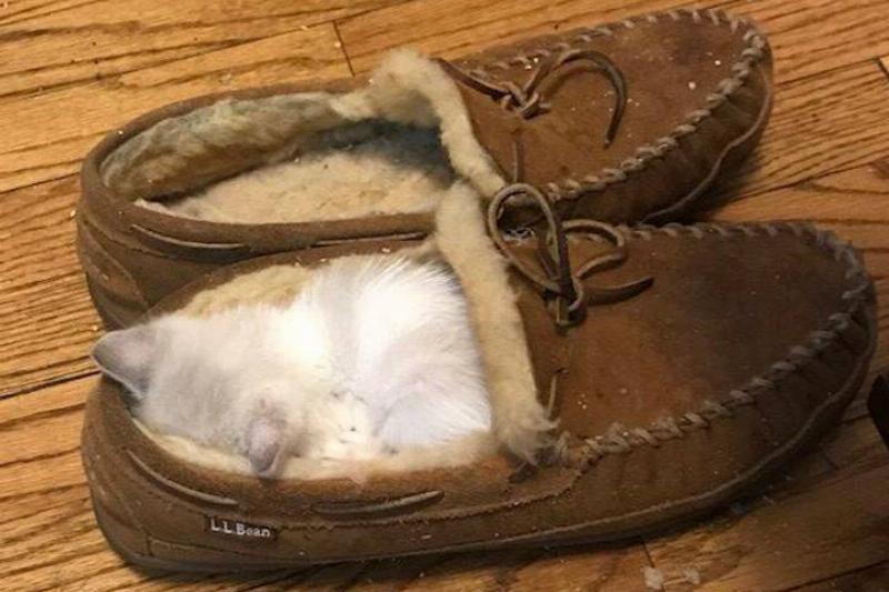 A Slipper Or A Kitten Bed