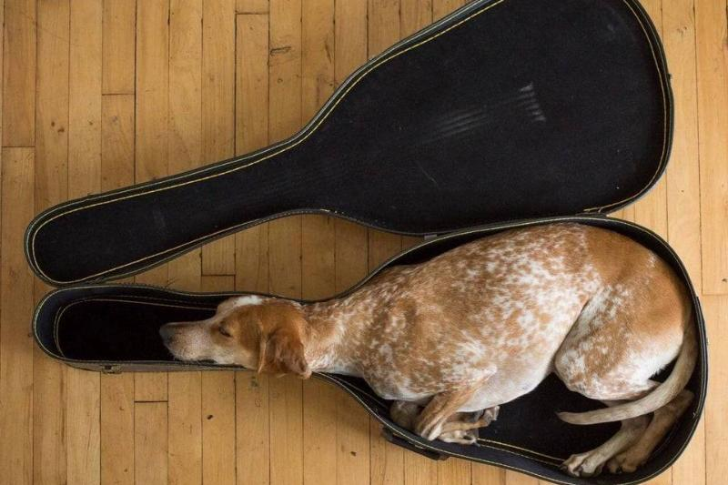 A Travel Case For Dogs!